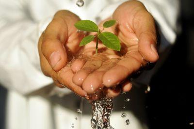 Memperingati Hari Lingkungan Hidup, Pemuda Muhammadiyah Menggelar Acara Satu Kader Satu Pohon